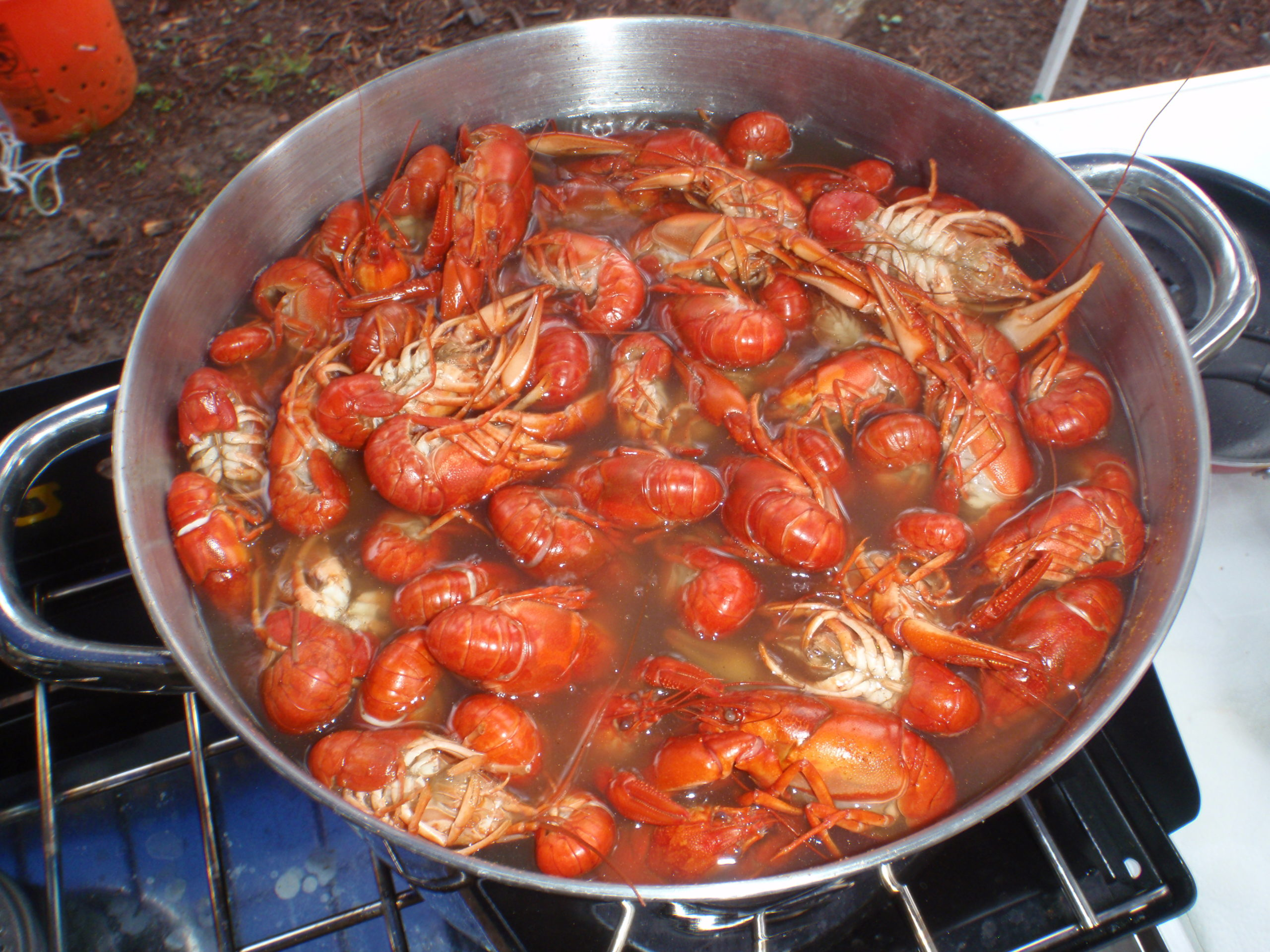 stock pot full of boiled crawdads